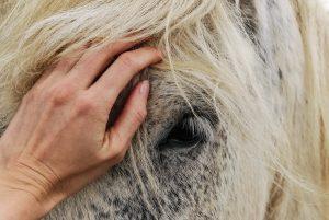 reiki, art, equine, horse, energy painting, Wendy Hartley art